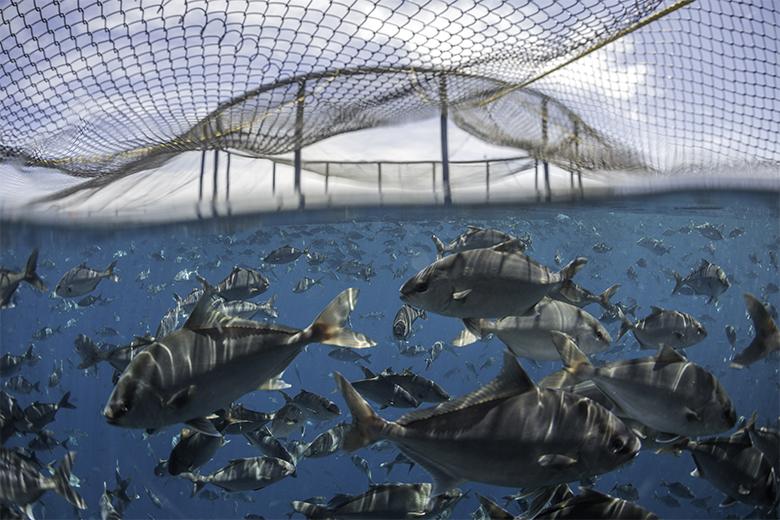 Aquaculture_780
