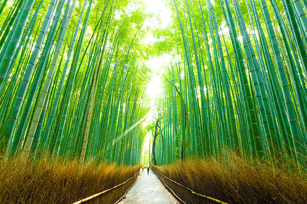 bamboo-StanChart-spon-600
