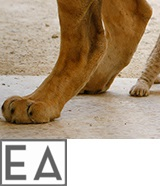 Lion-cub-R-160x186-white3-EA