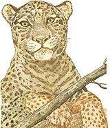Brazil-real-50-leopard-160x186
