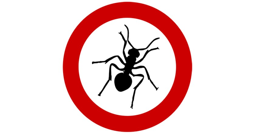 ant-no-stop-restricted-sign-760.jpg