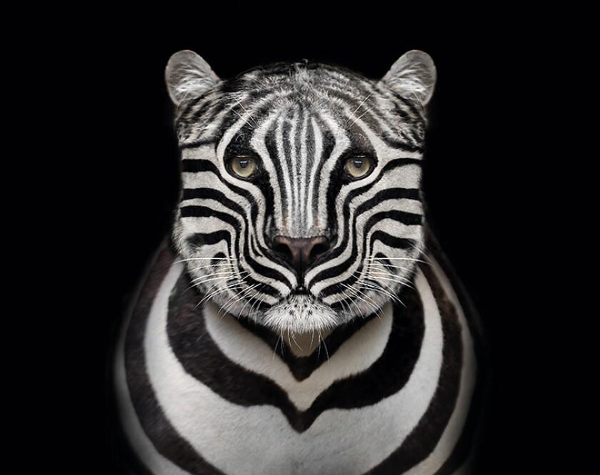 Leopard_Zebra_780