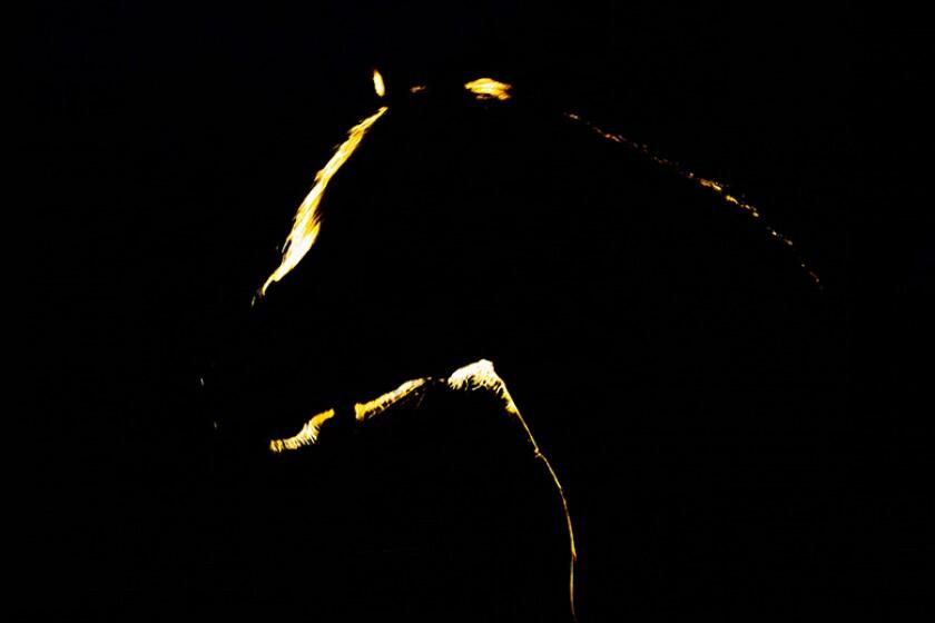 dark-horse-silhouette-780.jpg