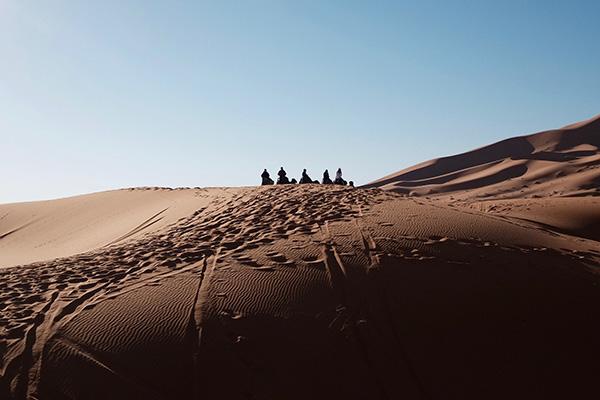 camels desert horizon-600